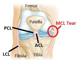 anatomy of the knee illustration